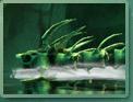 Serpent de mer DomZ